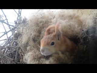 Белка построила гнездо прямо под окном
