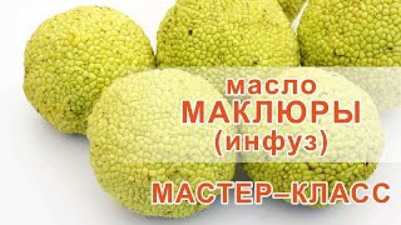 Маклюра инфуз рецепт » Freewka.com - Смотреть онлайн в хорощем качестве