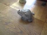 Death Metal Frog