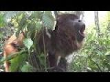 Death Metal Howler Monkey  Metal Injection