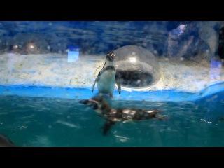 Поход в пингвинарий Джубга