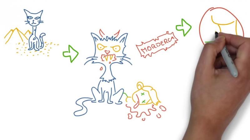 Ciekawe i niewygodne fakty o kotach