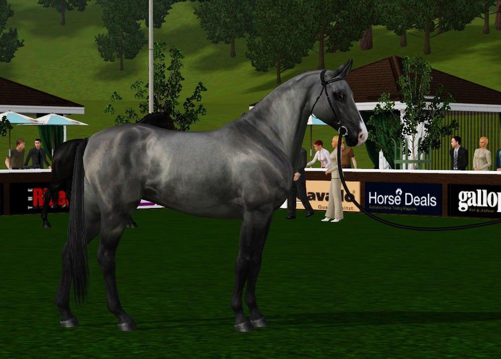 Регистрация лошадей в RHF 2 CpR2ydCBecE