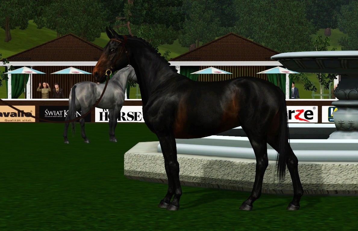 Регистрация лошадей в RHF 2 9rQsq-n4V4o