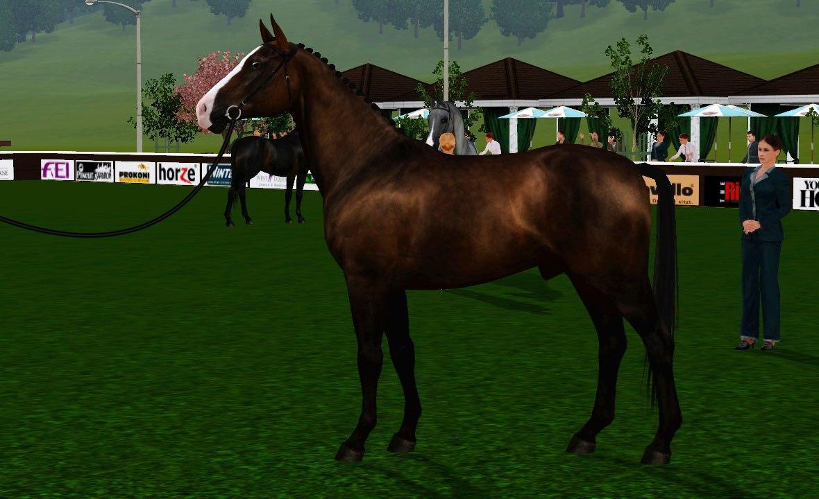 Регистрация лошадей в RHF 2 4eI5DDqgs1Y