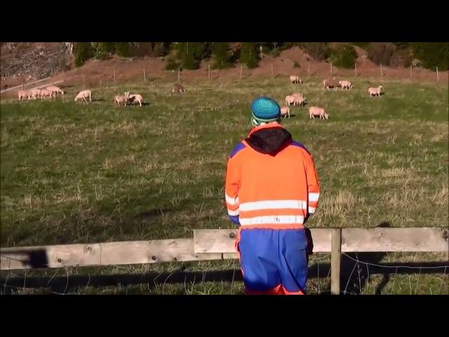 Услышат ли овцы голос только своего пастуха?