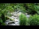 自然音 ヒグラシと森の小川のせせらぎ Tanna japonensis and Forest creek