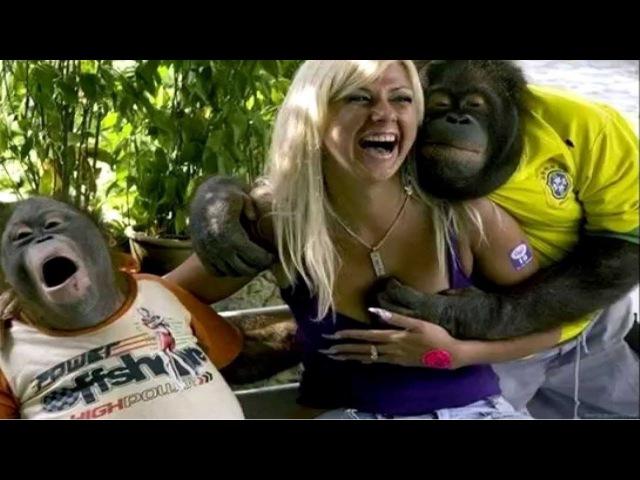 Смешные обезьяны Приколы про обезьян Funny monkeys 3 (Отличное смешное видео с обезьян...