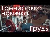 Тренируем грудные мышцы. Секреты идеальных грудных.  Тренируем грудь.