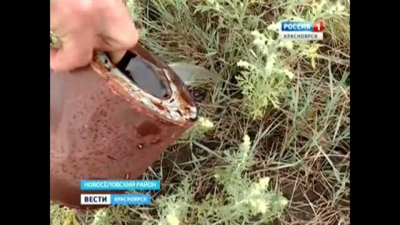 В Новосёловском районе обнаружены пауки неизвестного вида