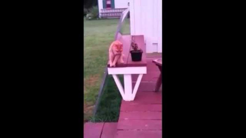 рыжий кот сидит ка человек