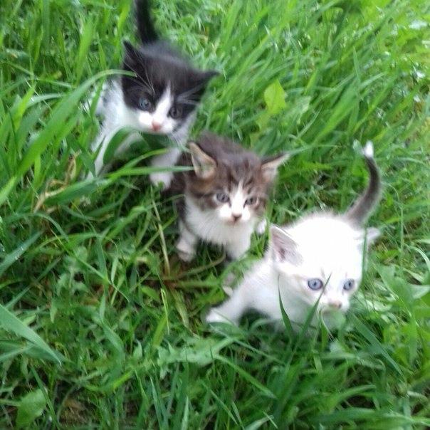 #Животные@bankakomi Отдам котят в хорошие руки! Им 1 мес. Светлый и с