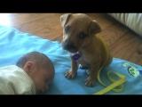 Ребенок уснул, смотри, что сделала собака