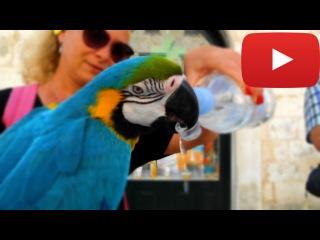 Хорватия Прикольные попугаи (Croatia Funny parrots)