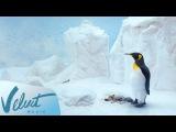 Трейлер: Ёлка & Илья Лагутенко - С любимыми не расставайтесь (OST