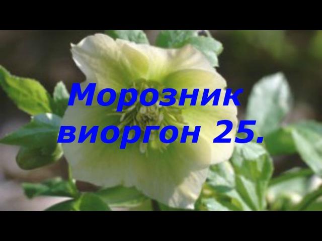Морозник Виоргон 25 Т Севостьянова врач терапевт высшей категории