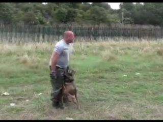 Собака - телохранитель. Уровень подготовки - бог!