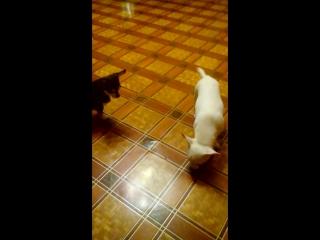 Карамель - это кошка;-)