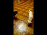 Карамель - это кошка-)