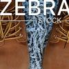 Zebra (магазин стоковой одежды и обуви)