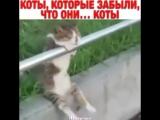 Кто-нибудь, скажите им, что они коты