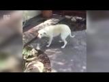 Кто плохая собачка?