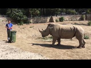 Ну, в старые добрые времена носороги были довольно опасны