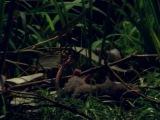 Эти загадочные животные / BBC: Weird Nature 3 Bizarre Breeding