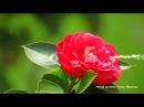 Притча о любви цветка и ветра.Музыка Эрнесто Кортазар.