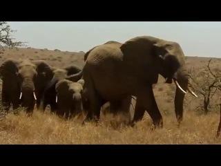 Выжить любой ценой . Африканская саванна .2016-2017. 3 серия 1 сезон