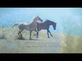 Born Free ( 1967 ) - ANDY WILLIAMS - Lyrics