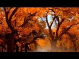 С.Жавхлангийн шинэ дуу - 'Альшаа уулын бороо'