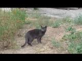 Кот _ печальное лицо