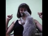 Когда кот тебя реально любит)