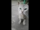воронежский уличный кот