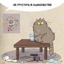 Чему поучиться у котов?