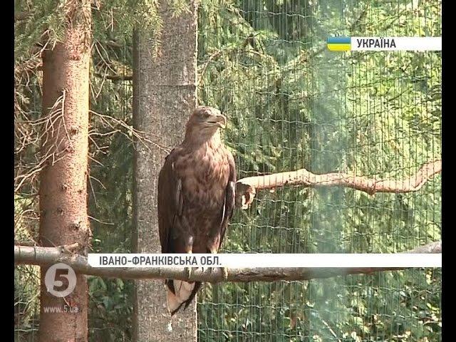 Унікальний центр реабілітації тварин прихистив 2 червонокнижних птахів