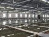 2014 Новости дня - Сахалин. Разведение лососевых рыб  в промышленных масштабах
