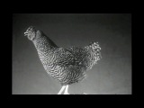 """""""Chicken Screen Tests"""" by Aaron Rose - NOWNESS"""