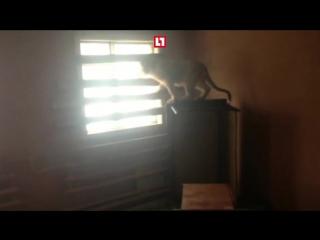 В промзоне на юге Москвы нашли двух шестимесячных львят