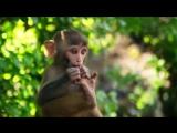 Monkey Temple - Swayambhunath in 4K