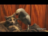 Попугай разговаривает с котом