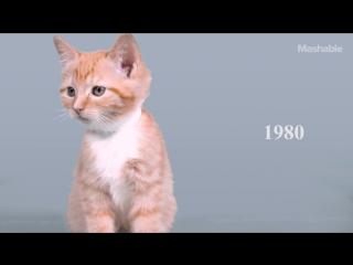 100 лет красоты котенка за 60 секунд