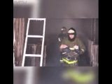 Firefighters save pigs.