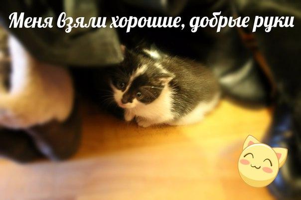 Фото №456239086 со страницы Лены Гильмановой