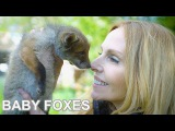 BABY FOXES UP CLOSE - Beautiful Animal Rescue