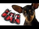 Домашние животные/Той Терьер/Одежда для собаки на прогулку