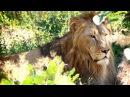 МИР БЕЗ ГРАНИЦ №8 В мире львов