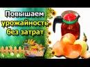 ☘ЛУКОВАЯ ШЕЛУХА как удобрение на огороде Дедовские методы против болезней растений