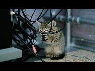 Смешное видео про животных Приколы с животными Смешные кошки Часть 2